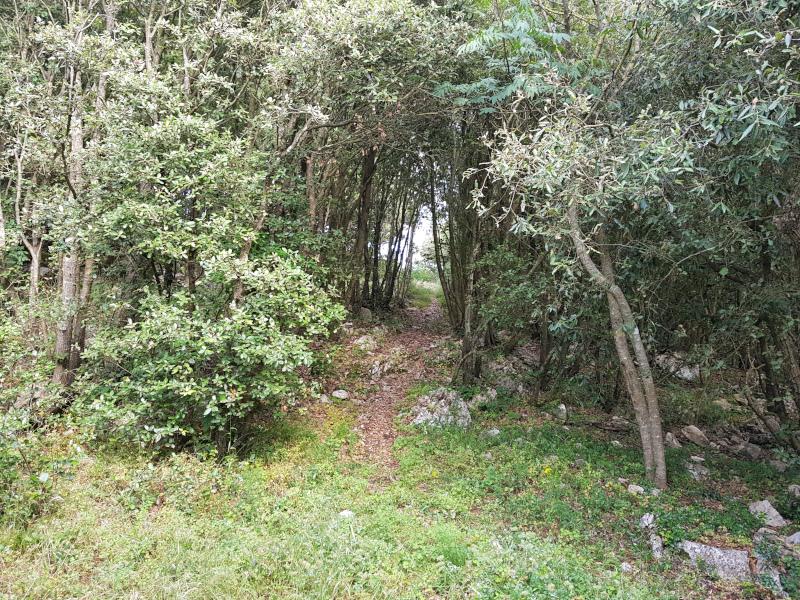 Monte Piglio - Collicello